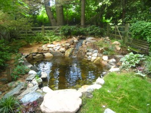 pond renovation vs. pond repair