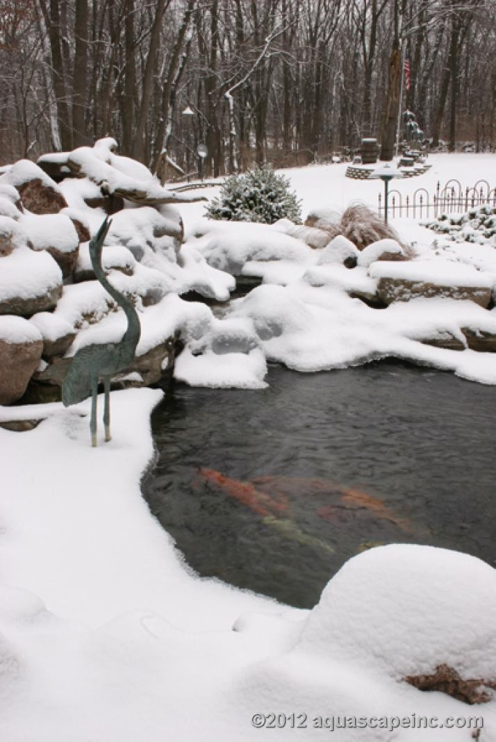 How to care for your pond in the winter aquareale pond blog for Fish pond care