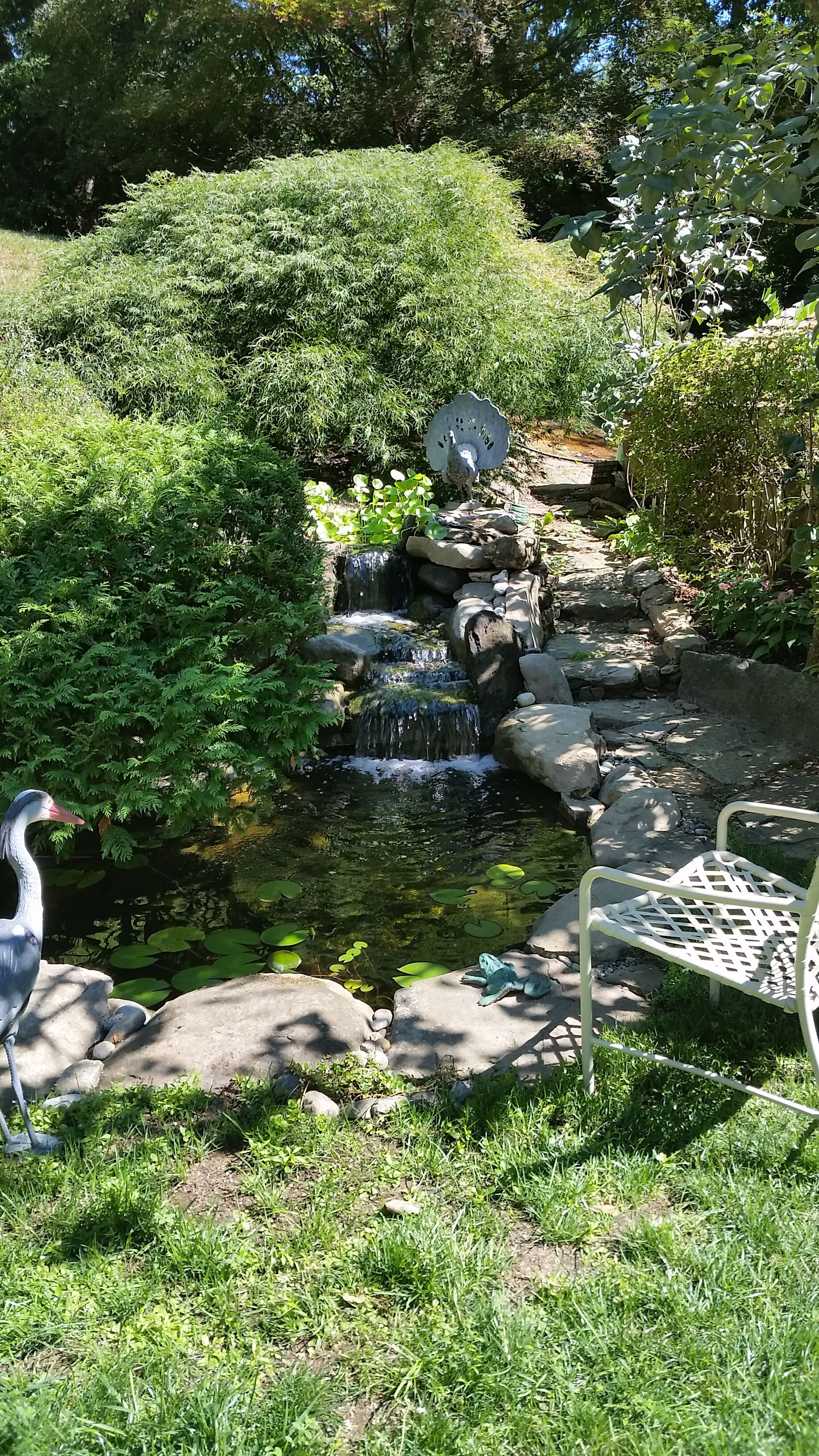 Pond renovation in mind? Our top 3 suggestions