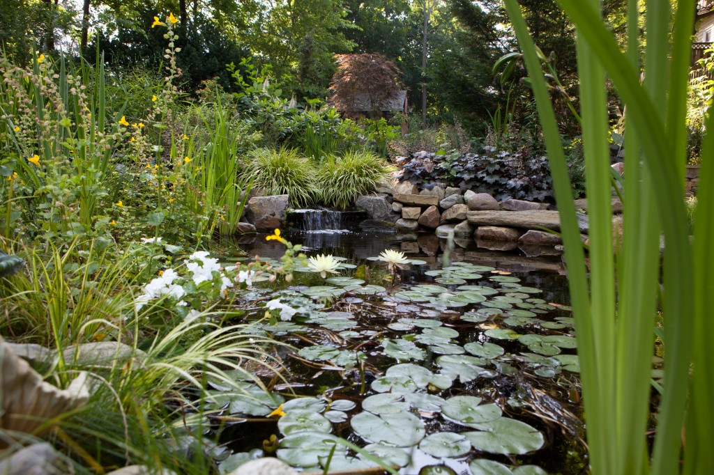 Pond ecosystem working with nature aquareale pond blog for Garden pond ecosystem