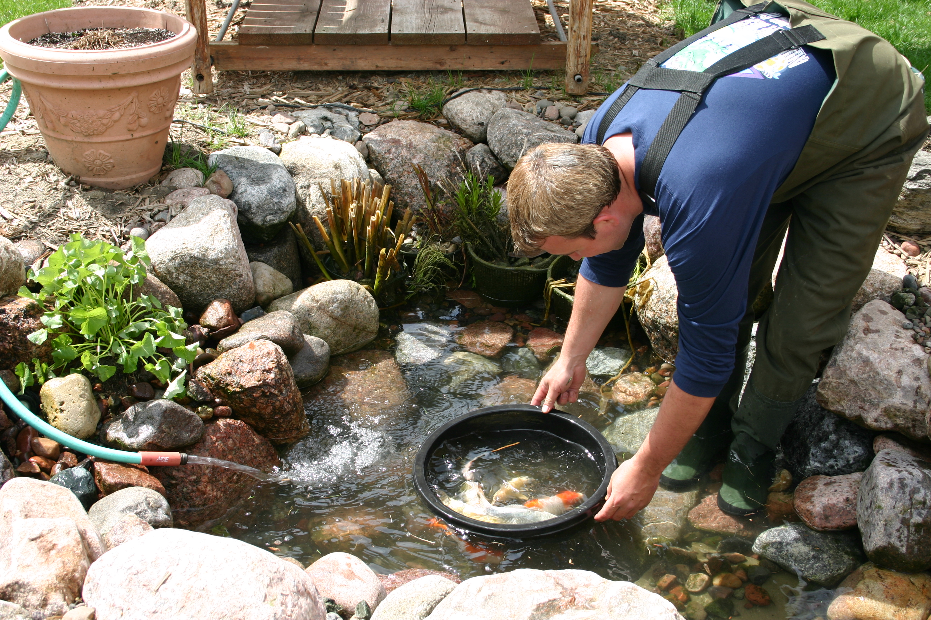 How to clean a koi pond aquareale pond blog for Fish pond repair