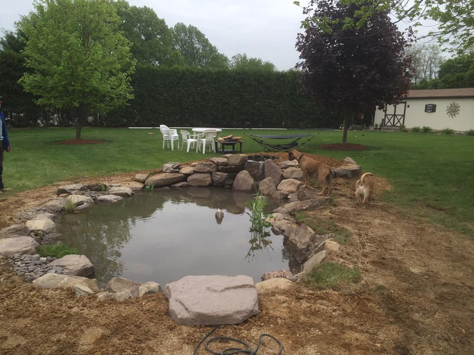Koi Fish pond After