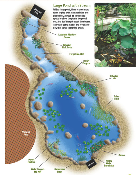 pond plant diagram-- large pond