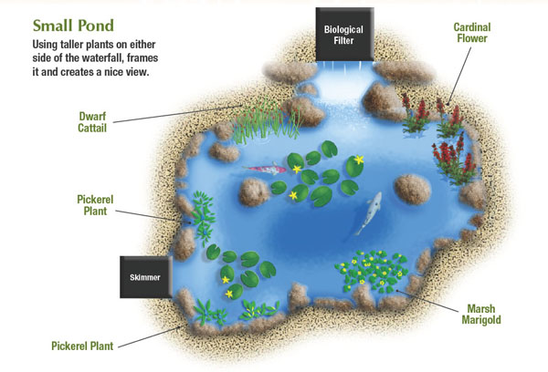 pond plant diagram