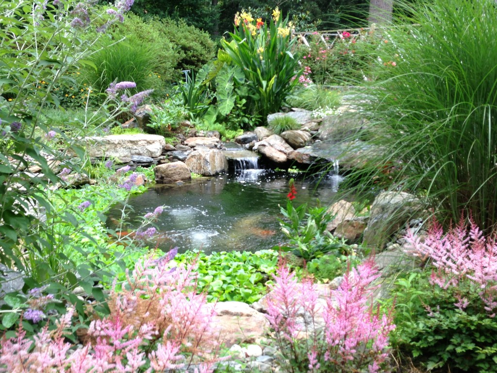 Healthy Pond Plants