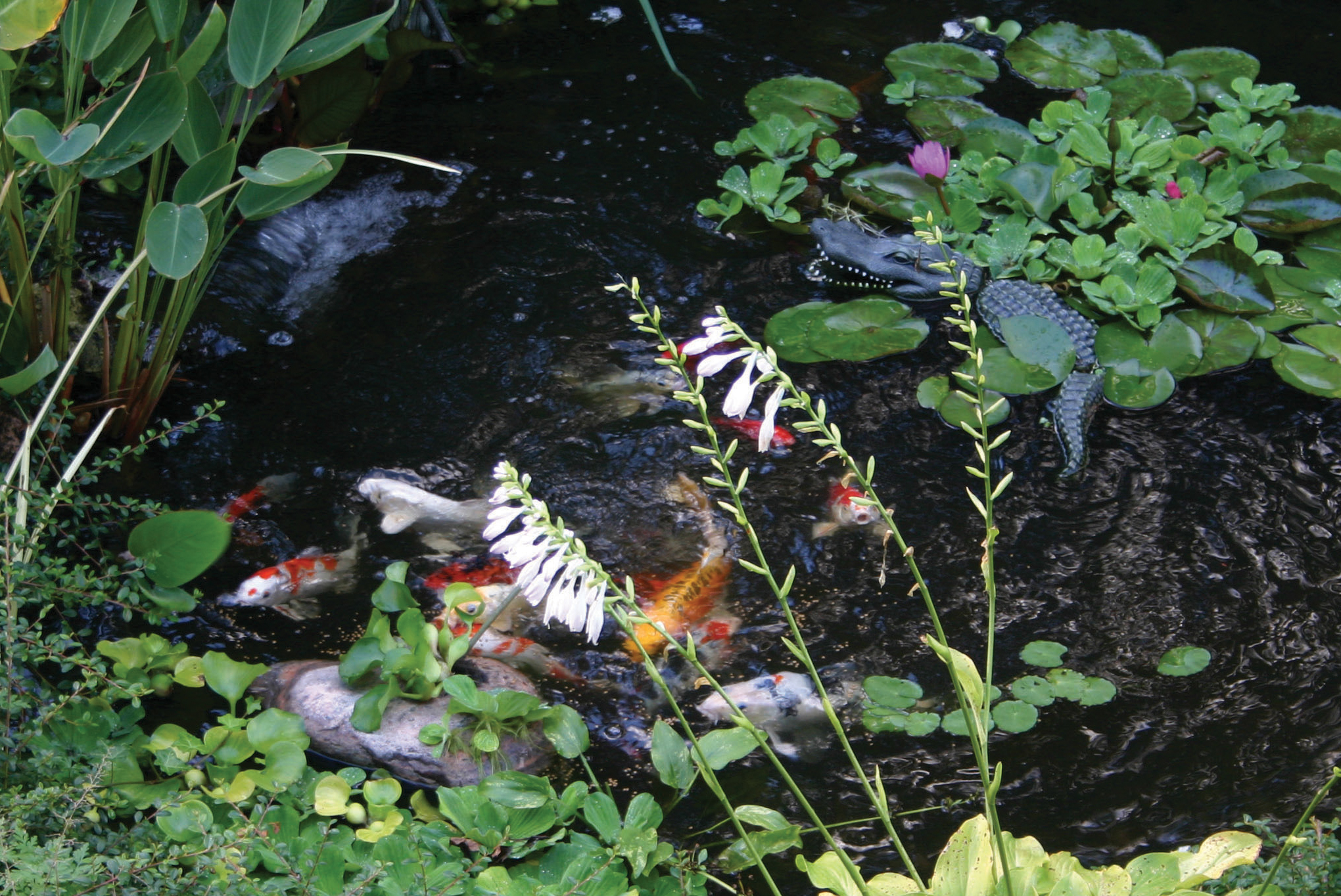 Pond predators how to win the battle aquareale pond blog for Garden pond without fish