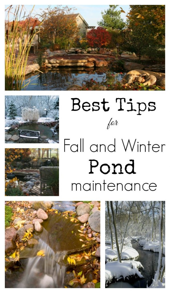 Fall Pond Care