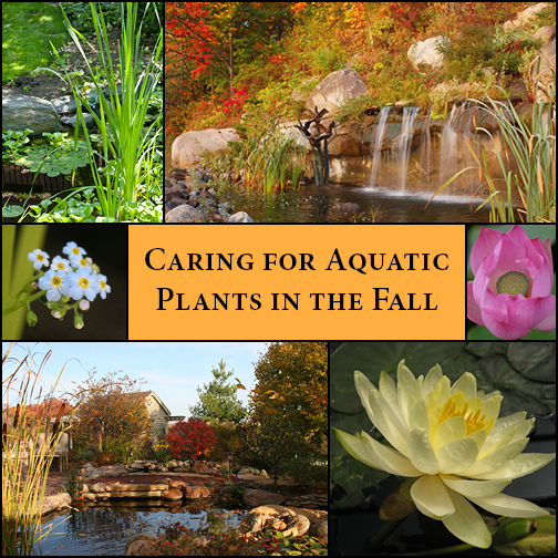 Pond Plants in the Fall