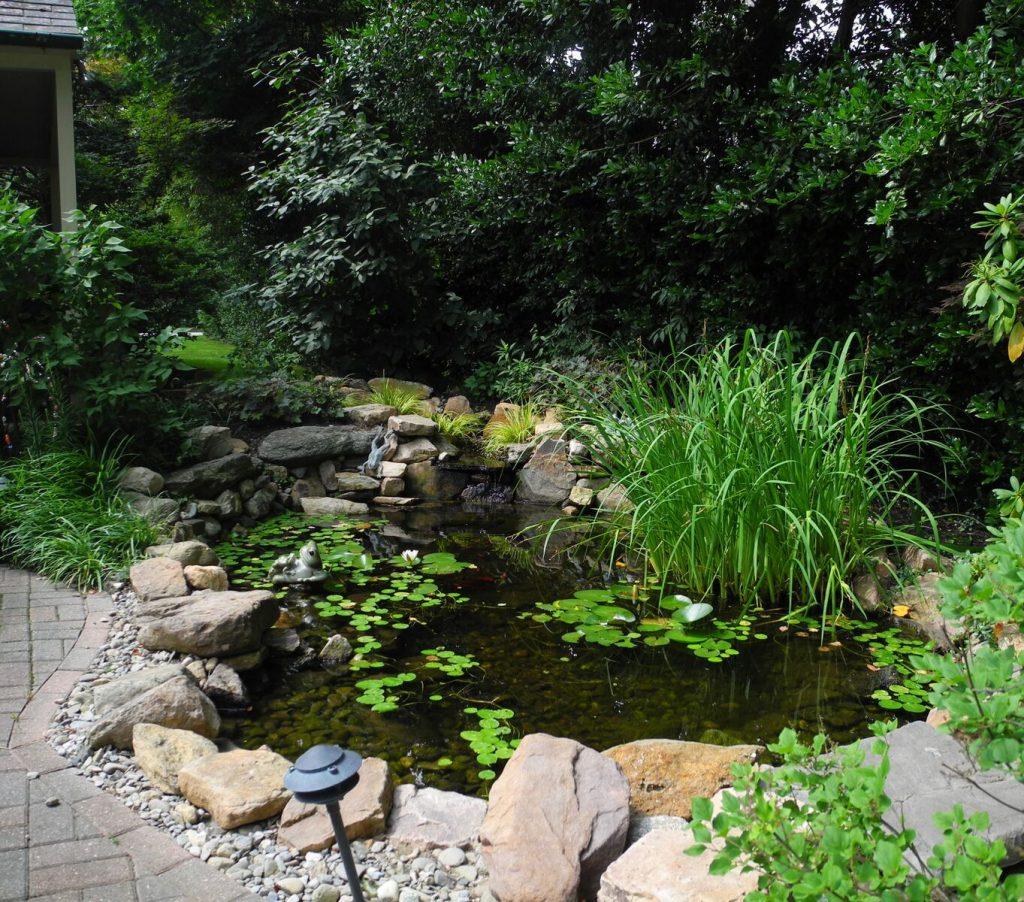 Philadelphia Pond Leak