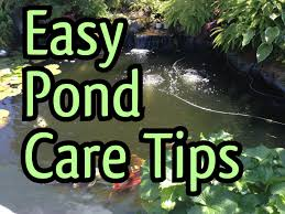 Philadelphia Spring Pond Maintenance