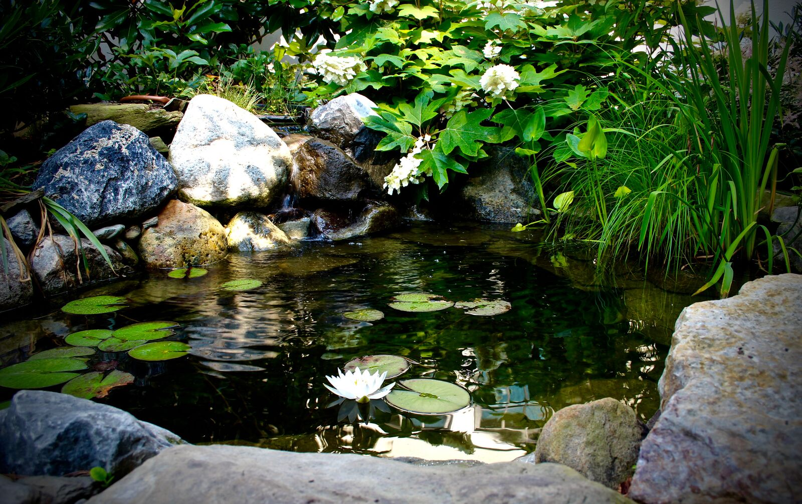 Montgomery county pond lighting archives aquareale pond blog for Fish pond installers