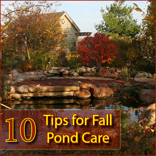 Bucks County, PA Fall Pond Care