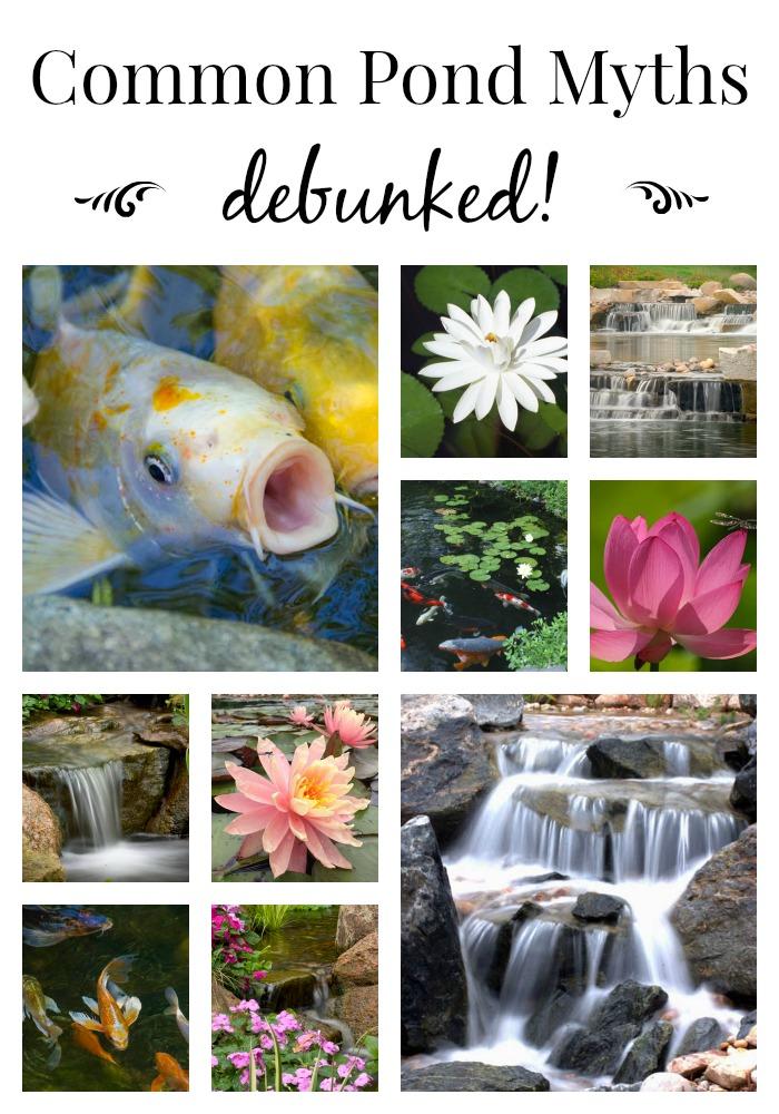 Philadelphia Koi Pond