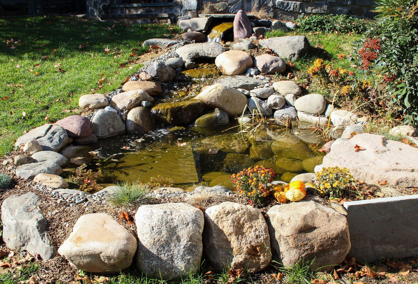 AquaReale Pond Blog - The Source For Pond Inspiration