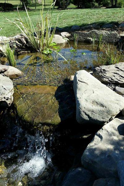 Wetland filter pond in Doylestown, PA