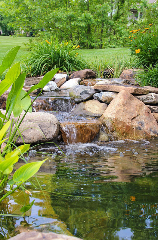 Pond renovation in Buck's County
