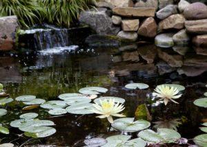 Custom Pond with Waterfall
