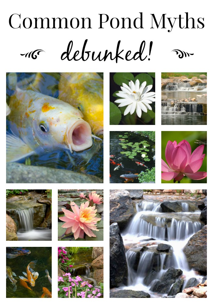 Pond Myths Debunked