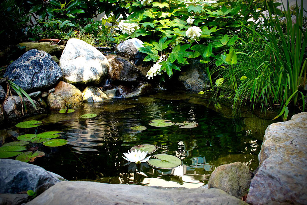 Small koi pond in Montgomery County