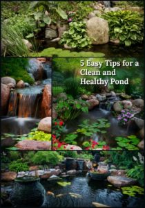 5 Tips for a clean pond