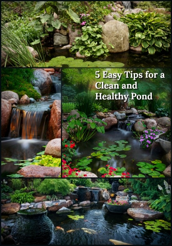 healthy pond