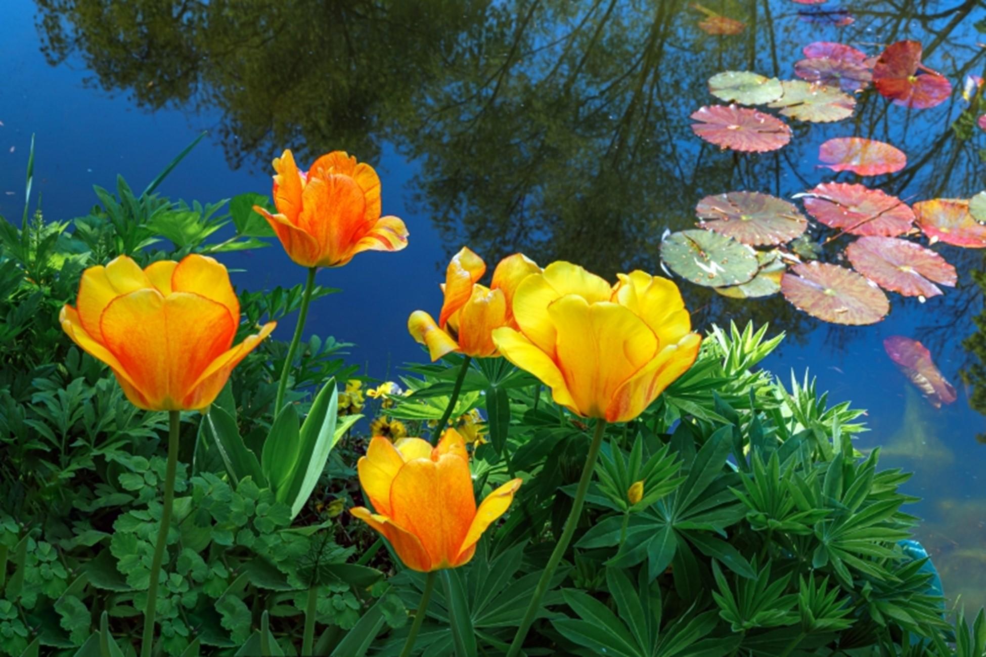 Spring Pond Changes