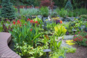 Aquatic flowers in pond