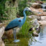 Blue Heron Decoy